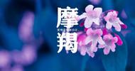 在8月中旬之后,将迎来不错的桃花运,会享受甜蜜爱情的三大星座
