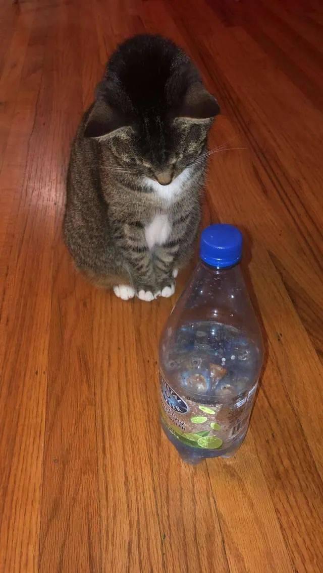 「Poppy」养了一只不怕水的猫是一种什么体验?主人表示快被气死了,