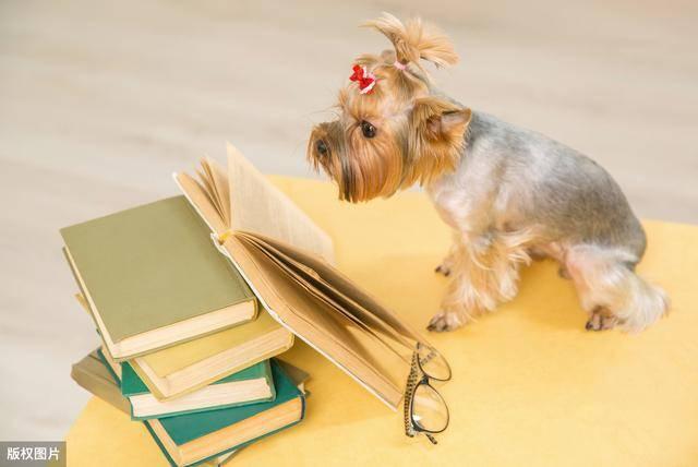 狗狗把自己当人的6种行为证据,你家狗狗中招了吗