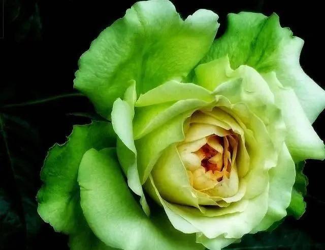 原创             心理测试:你第一眼喜欢哪朵花,测出你会不会轻易上当受骗