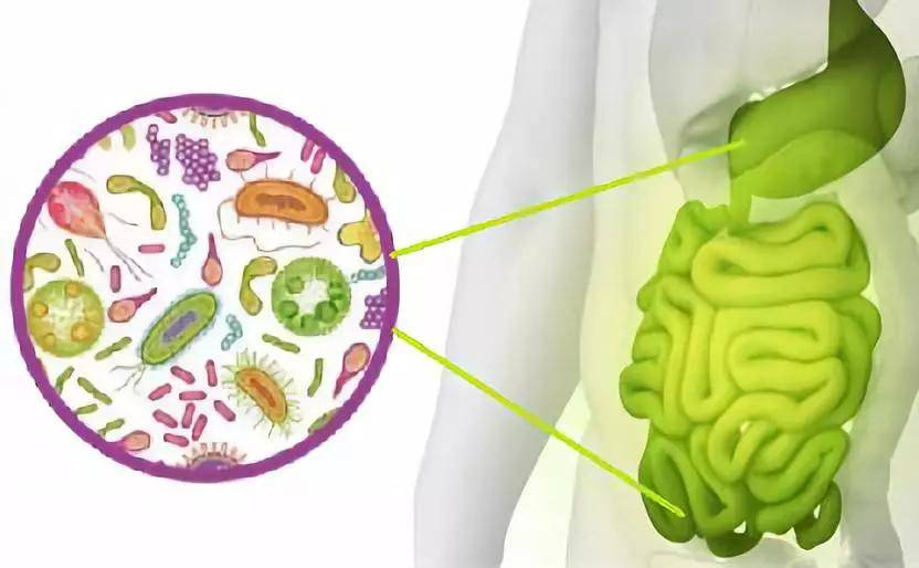 上海益博会许洋带您了解益生菌对人体的重要性!