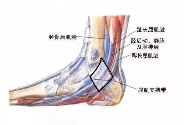 管 足 症候群 根 足裏の痛み・痺れは自分で治せる!足根管症候群の7つの治療法!