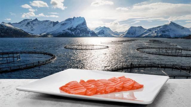 欧洲主要三文鱼供应商股价下跌,对员工进行检测,无人患新冠_庄和闲