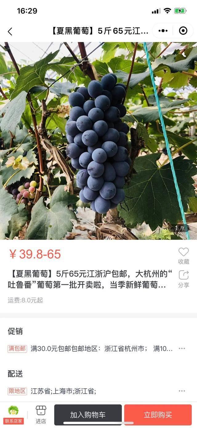 """微信小程序or京东商城?""""大杭州的吐鲁番""""开启葡萄季,手机点点""""鲜""""尝起来"""