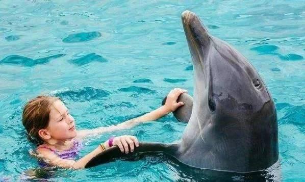 海豚为何喜欢亲近人类?原来在海豚的眼里,我们长这样!