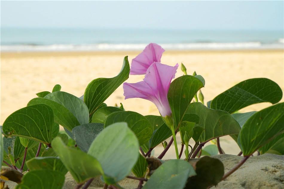 """粤西行:茂名,中国第一滩,一寸短一寸""""鲜""""的海钓"""
