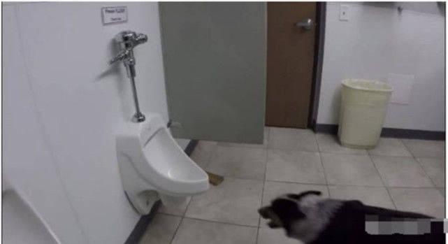 原创 狗狗跑进茅厕去尿尿,上完还不忘冲茅厕,一旁男子惊得目瞪口呆