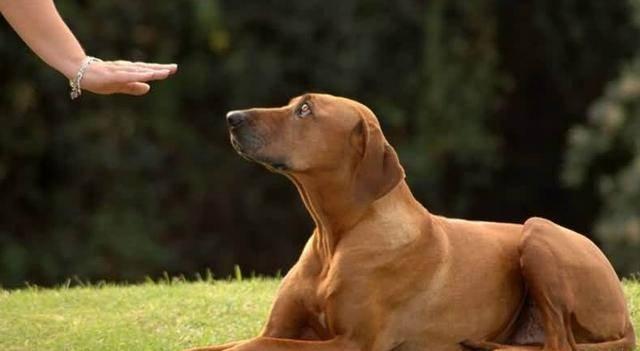 """狗狗把你当""""母亲"""",这4个显示藏都藏不住,你体会过没?"""