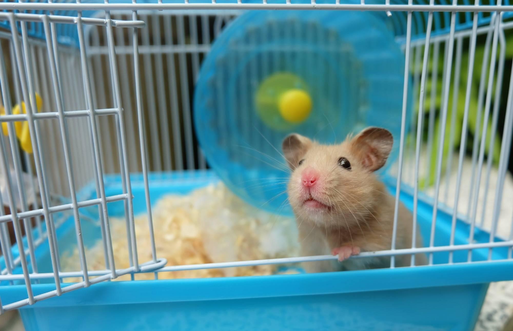 """你给仓鼠住的笼子真的是""""别墅""""吗?最全面的仓鼠笼选购攻略 (图2)"""