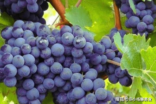 夏天经常吃葡萄好处多,不仅抗衰老,还能增强孕妇的抵抗力!