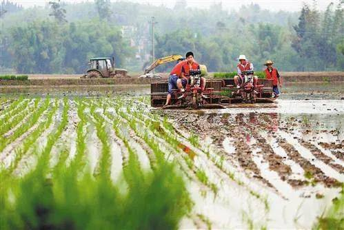 【政策:支持扶持专业农业服务公司;业内人士:2025年是植物工厂元年】