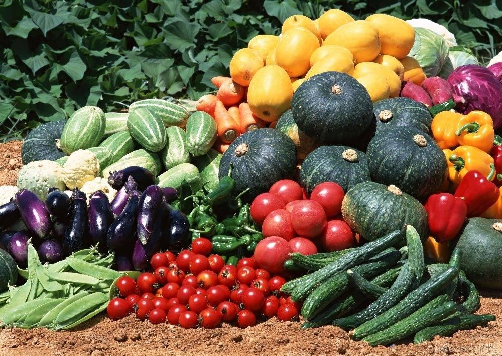 好食速递:为什么蔬菜一定要吃新鲜的?
