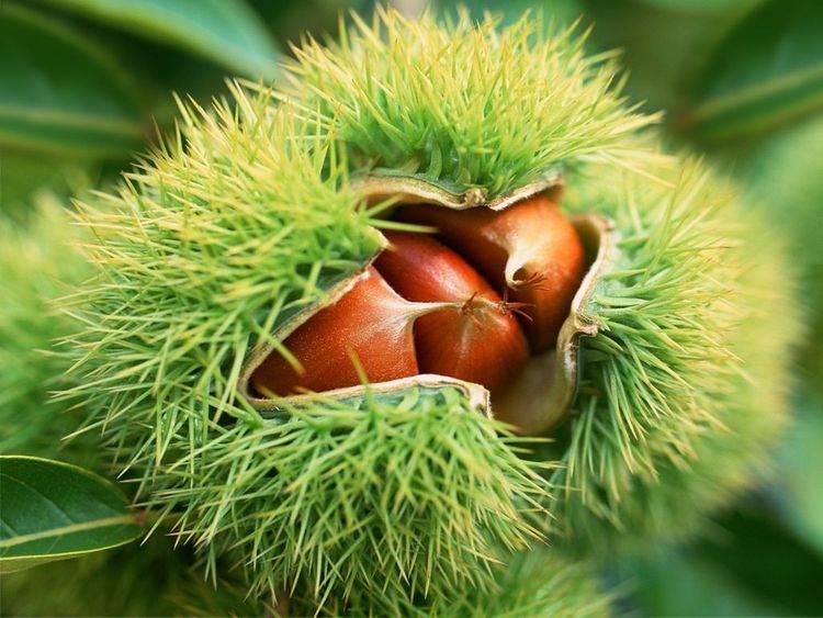 秋季女性不妨常吃此物,缓解情绪,抗衰老,还能促进胎儿发育