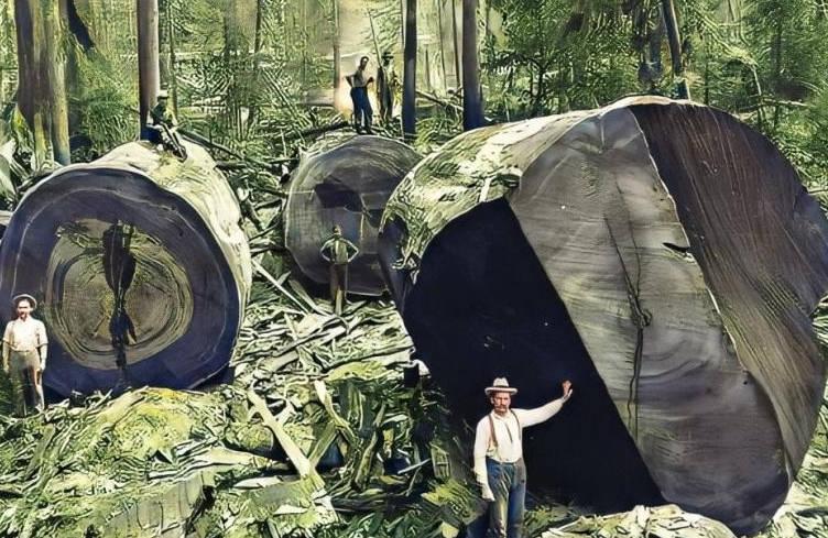 9张让人感到惊奇的照片,5千年的巨树,被压成肉酱的宇航员