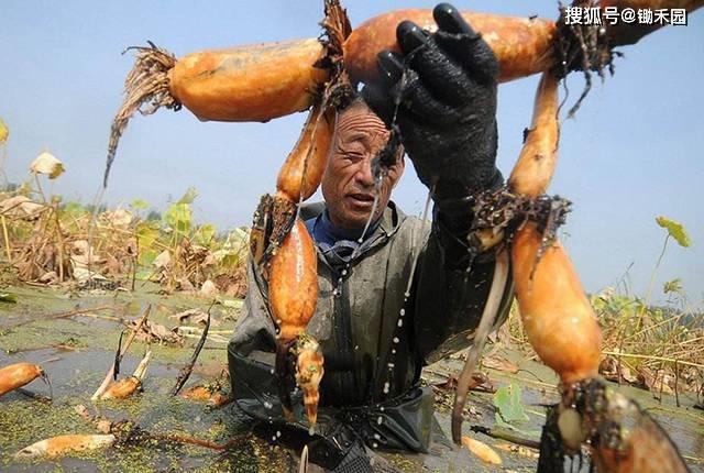 让滞销商品变成断货 让农产品更赚钱 这些方法值得一试!