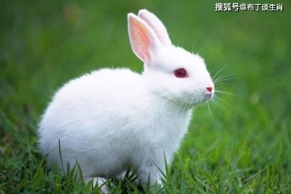 生肖兔:再过不到七天,你就会遇到以下