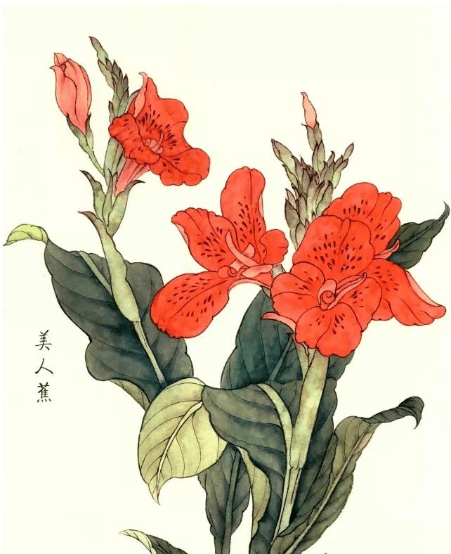 第一步:用中等墨水钩住树叶、树枝和树干,使墨水烧焦 朱顶红工笔画