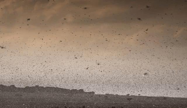 肆虐印度的4000亿只蝗虫距中国还有多远?它们会飞到中国吗?