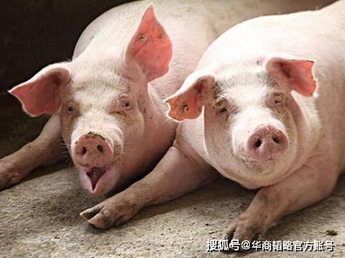 _猪价拖累牧原股份,千亿猪首富秦英林身家缩水超600亿