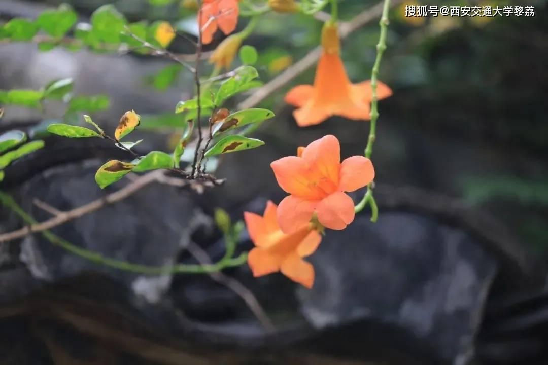 与珍宝以前遇到的红玫瑰相比,王娇瑞是辛辣的、冲动的、多情的