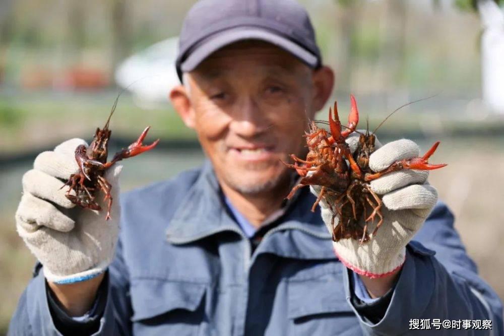 1261万亩小龙虾引争议,要虾还是要稻?