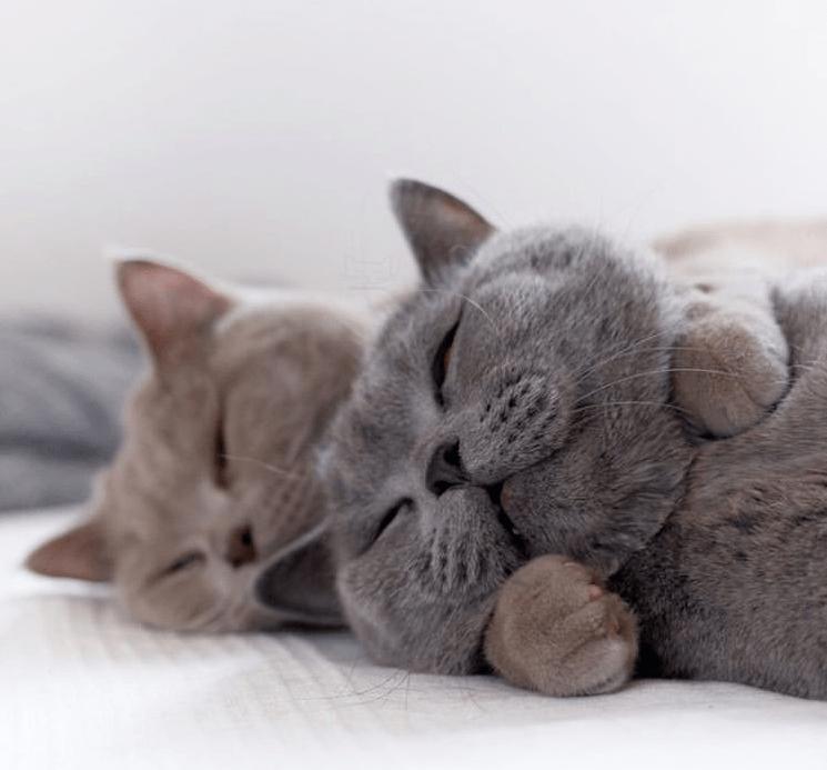 最甜的兄弟猫,实在是太太太太太上头了