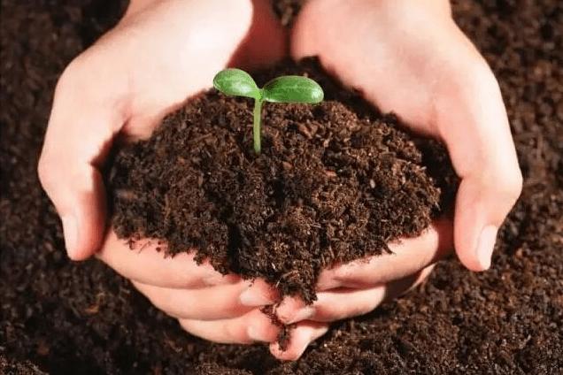 死苗烂棵防治技术及土壤修复解析