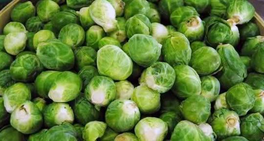 农村路边的野菜, 改善慢性支气管炎、尿血 ,全家抢着吃
