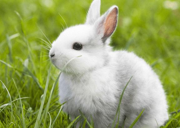 兔子大便不成形软偏湿