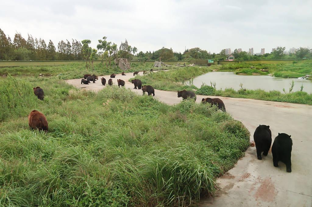 恒达首页上海野生动物园黑熊咬死人,应急救援机制为何又失灵?(图3)