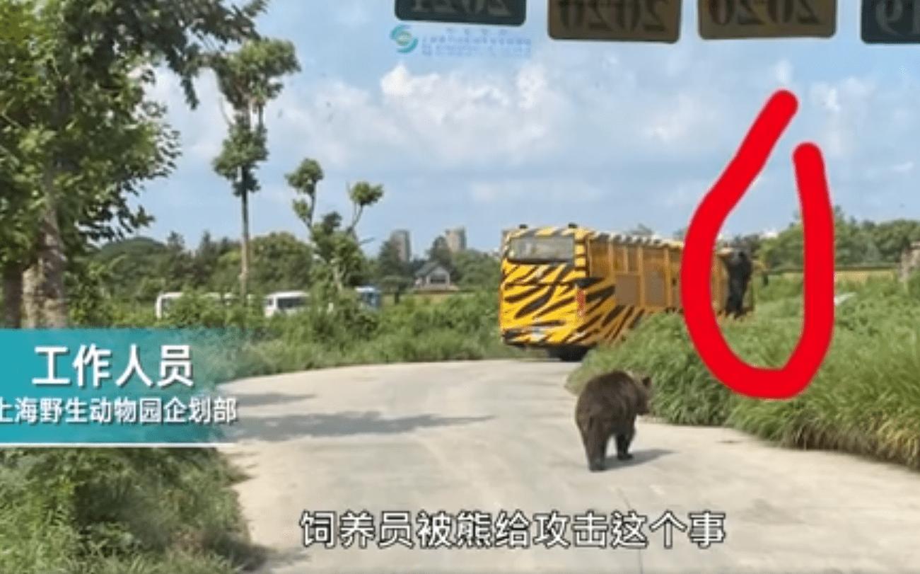 上海野生动物园群熊伤人救援画面 饲养员为什么要下车?
