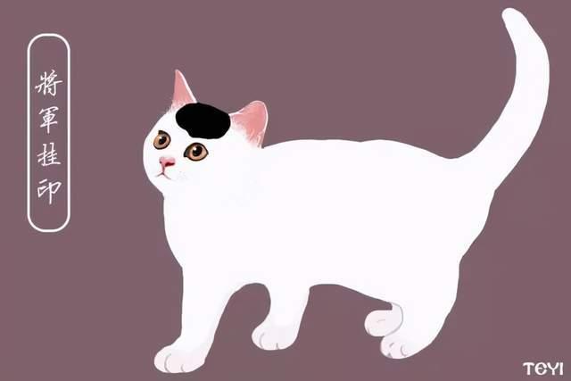 中华田园猫的品种鉴定在线图片