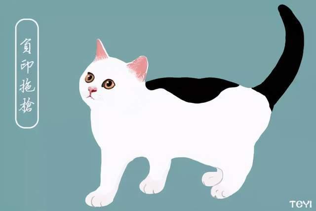 中华田园猫的名字图片
