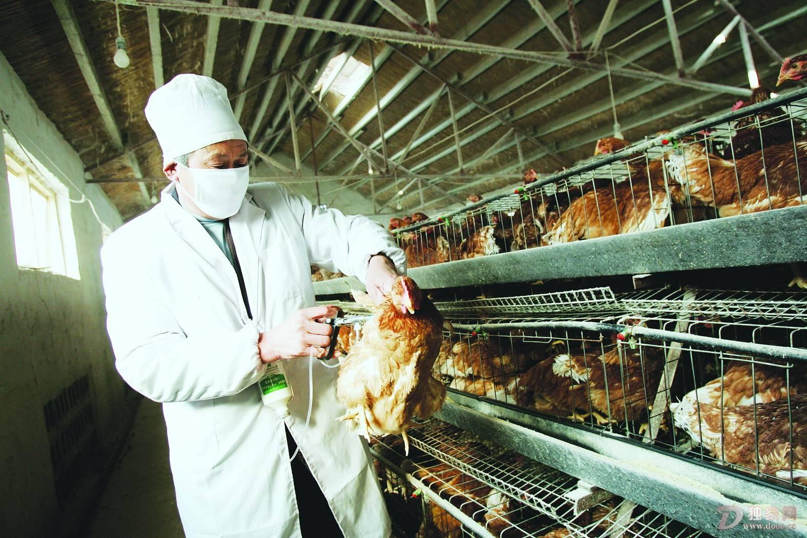 湖南泛起人熏染禽流感,专家:禽流感并不会大