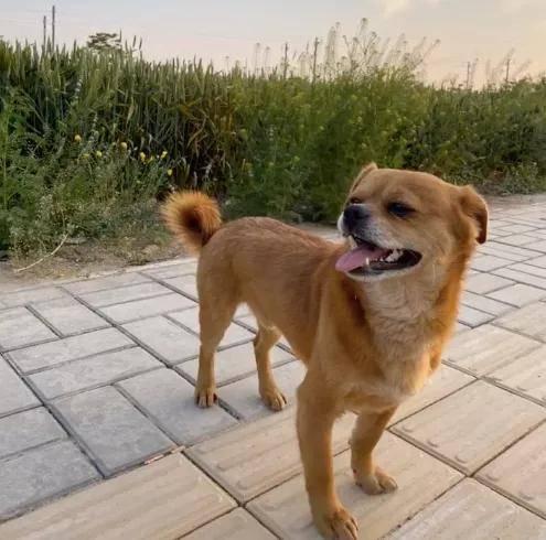 你什么时候发现:狗狗也在偷偷爱着你?