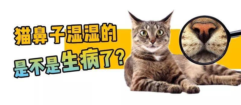 让你的猫猫更健康_怎么看猫猫是否健康_猫猫吃什么最健康