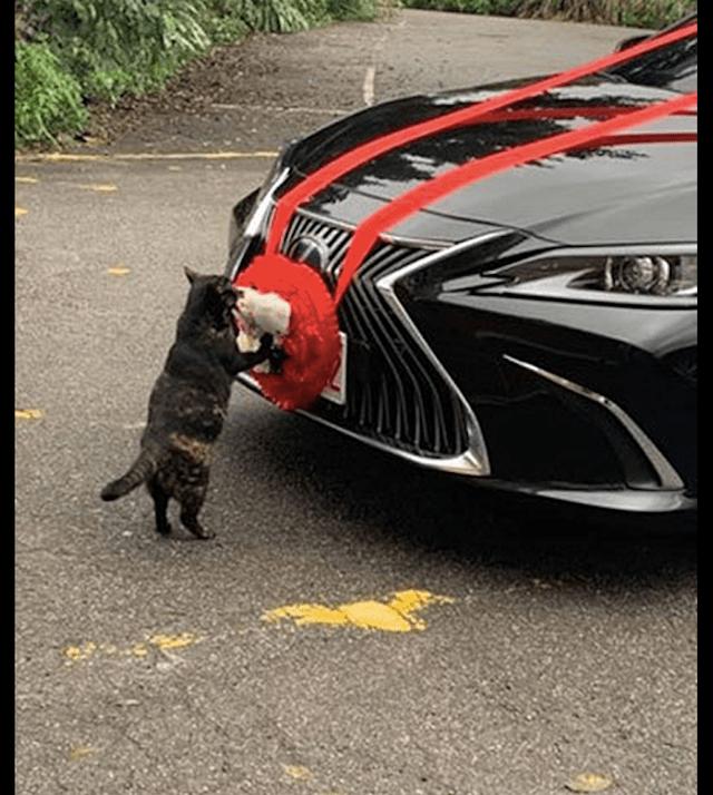 原来猫看到有人结婚,爬上婚车出轨。猫:没有小鱼我是不会走的