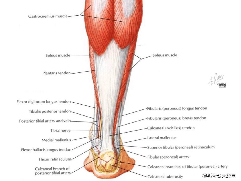 踝足矫形器图片