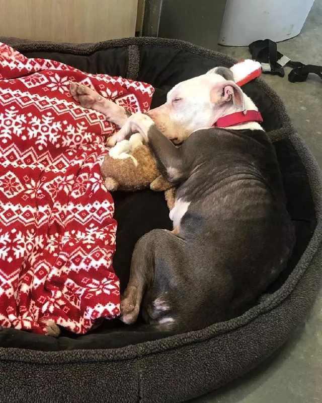 狗狗被遗弃救助站门前,身边的纸条写着:替我好好照顾它……