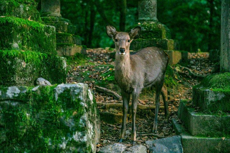 """原创             古都奈良,日本人称之""""东方的罗马"""",春日大社被列入世界遗产"""