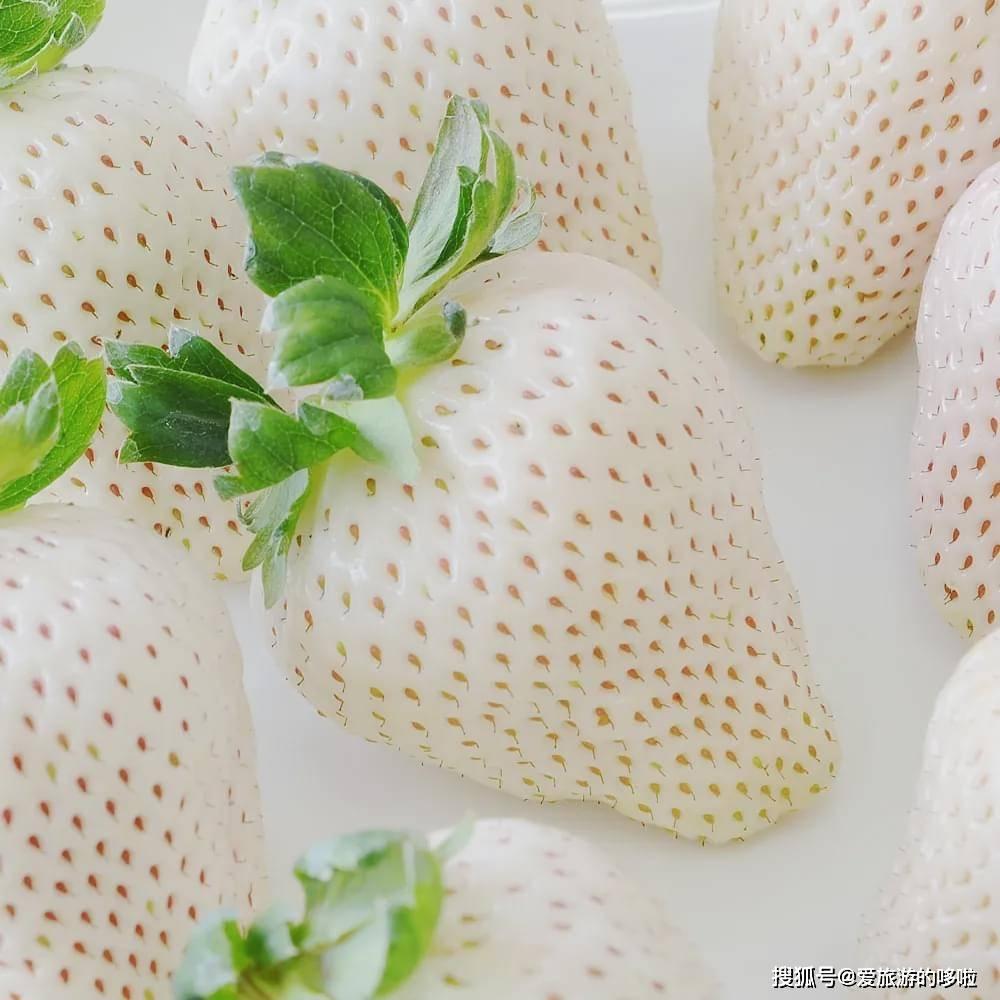 草莓实用挑选指南