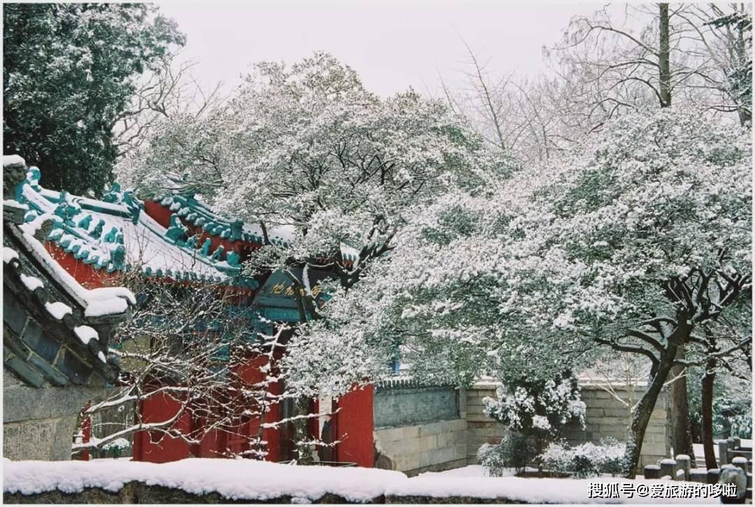 谁说冬日百花羞?这几个地方腊梅迎霜傲雪,快来踏雪寻梅!