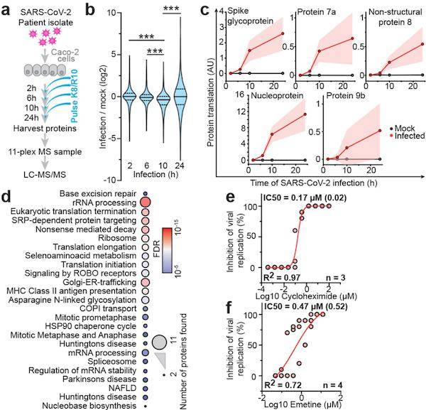 Nature:蛋白质组学研究揭示新冠肺炎的新型治疗靶点!