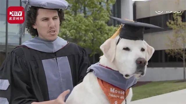 8岁狗狗获声誉博士学位!缘故原由也是很暖了