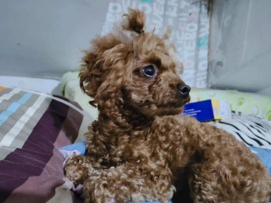 疫情时代,我意外遇见了一只真正能听懂人语言的狗狗……