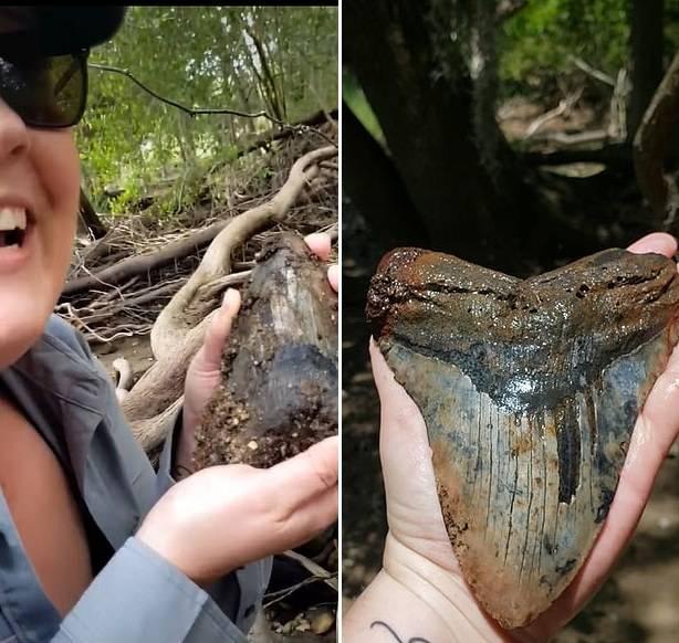 美国一对夫妻发现一颗史前巨齿鲨