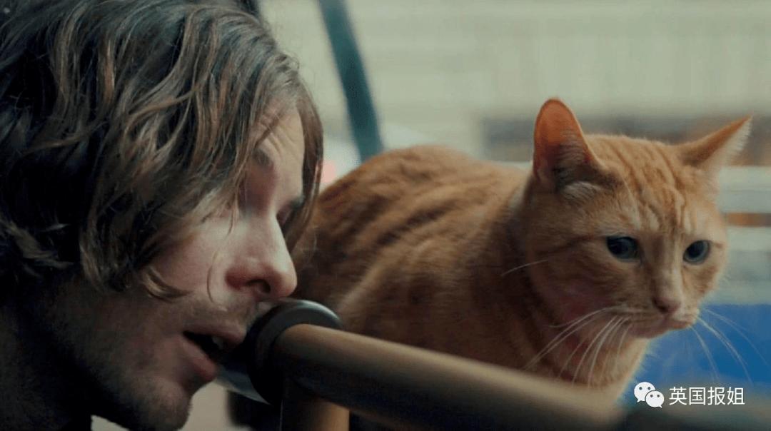 火遍全球的传奇橘猫去世,网友哭瞎:不想让它离开...