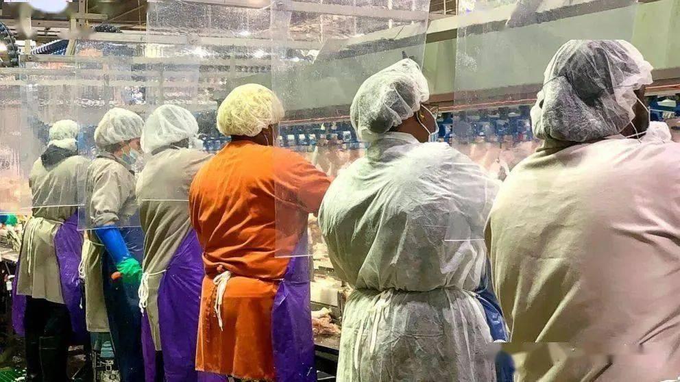 为什么偏偏是肉厂?英国肉类加工厂新冠爆发扩大,96确诊200隔离!
