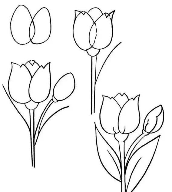 漂亮的郁金香简笔画画法 怎么画漂亮的郁金香 简笔画花朵 儿童简笔画