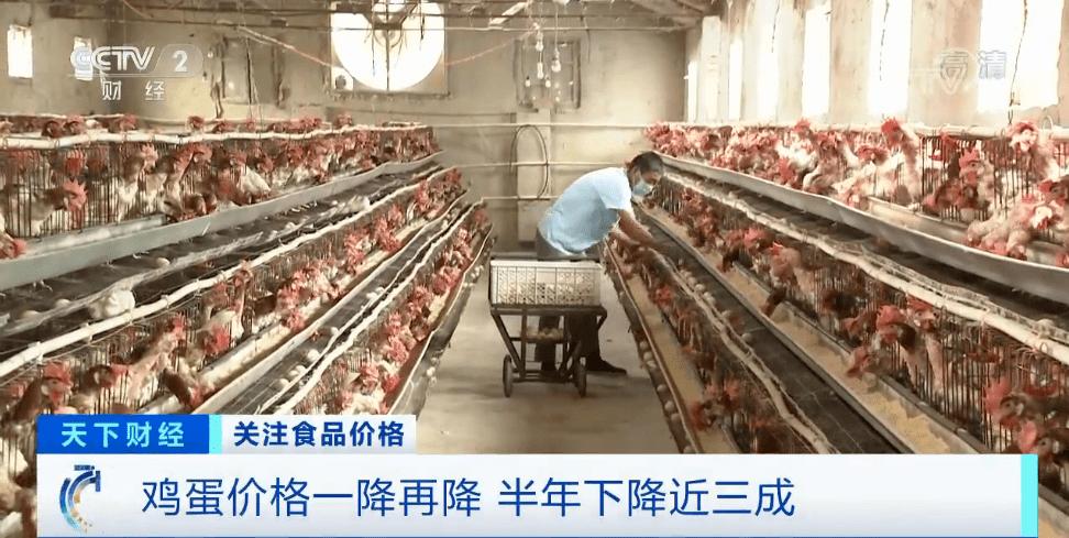 """鸡蛋价格大跌近30%,养殖户卖一斤亏0.7元!一降再降,为何如此""""蛋""""定?"""